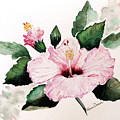 Pink Hibiscus by Karin  Dawn Kelshall- Best