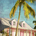 Pink House Palm by Guy Crittenden