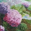 Pink Hydrangea by Christina Maassen