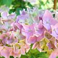 Pink Hydrangea Flower Garden Art Prints Baslee Troutman by Baslee Troutman