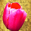 Pink Impression Tulip by Teresa Mucha