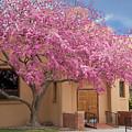 Pink In Bloom by Sabrina L Ryan