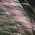 Pink In The Wind   by Michael L Gentile