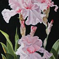 Pink Iris by Elaine Jacobs