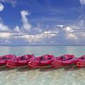 Pink Kayaks Lined Up by Dana Edmunds - Printscapes