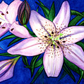 Pink Lilies by Stephanie  Jolley