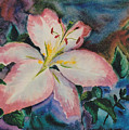 Pink Lily by Brenda Thour