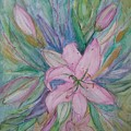 Pink Lily- Painting by Veronica Rickard