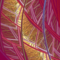Pink Lines by Deborah Benoit