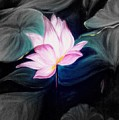 Pink Lotus by Dina Holland