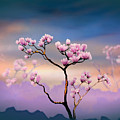 Pink Magnolia - Bright Version by Peter Awax