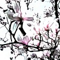 Pink Magnolia - In Black And White  by Janine Riley