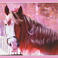 Pink Mare by John Breen