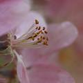 Pink Of Spring by Deborah Benoit