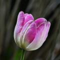 Pink On Display by Deborah Benoit
