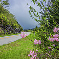 Pink On The Parkway by Dana Foreman