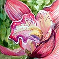 Pink Orchid by Mindy Newman