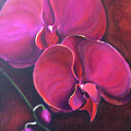 Pink Orchid by Silvia Philippsohn