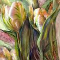 Pink Parrot Tulips by Carol Cavalaris