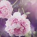 Pink Peonies by Bramblewood Studio
