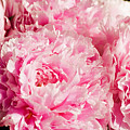 Pink Peony Bouquet by Mary Lane