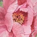 Pink Peony by Kristen Abrahamson