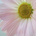 Pink Perfection by Susan Garver