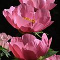 Pink Perspective 0552 by Terri Winkler
