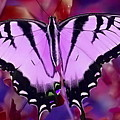 Pink Purple Butterfly by Gina Welch