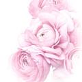 Pink Ranunculus Bouquet by Susan Westervelt