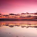Pink Reflections by Andre Distel