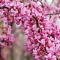 Pink by Rick  Monyahan