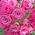 Pink Rose Bouquet by Dawn Gari
