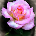 Pink Rose Faux Pastel by Endre Balogh