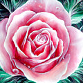 Pink Rose Flower by Sofia Metal Queen