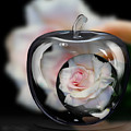 Pink Rose In Apple by Jeannie Rhode