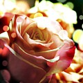 Pink Rose In Sparkling Lights by Cindy Boyd