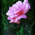 Pink Rose by Jim  Darnall