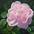 Pink Rose by Lyn Tietz