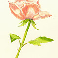 Pink Rose by Michael Vigliotti