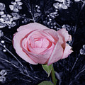 Pink Rose Of Imperfection by DigiArt Diaries by Vicky B Fuller
