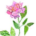 Pink Rose, Painting by Irina Afonskaya