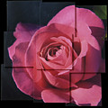 Pink Rose Photo Sculpture by Michael Bessler