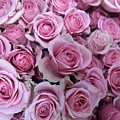 Pink Roses by Voncille Smith