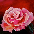 Pink Rose With Dew Drops Jenny Lee Discount by Jenny Lee