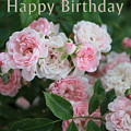 Pink Roses Birthday Card by Carol Groenen
