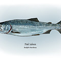 Pink Salmon by Ralph Martens