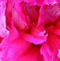 Pink Splash by Kristin Elmquist