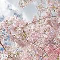 Pink Spring by Daniel Furon
