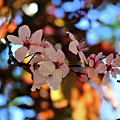 Pink Spring Flowers by Rosalyn Zacha